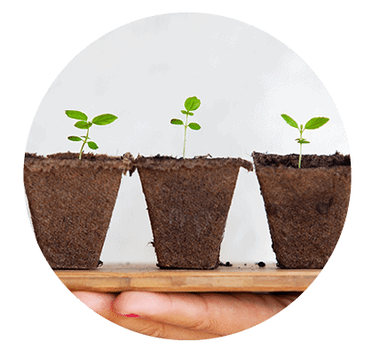 Grow your relationship with food like these seedlings working with a Dietitian in Melbourne.