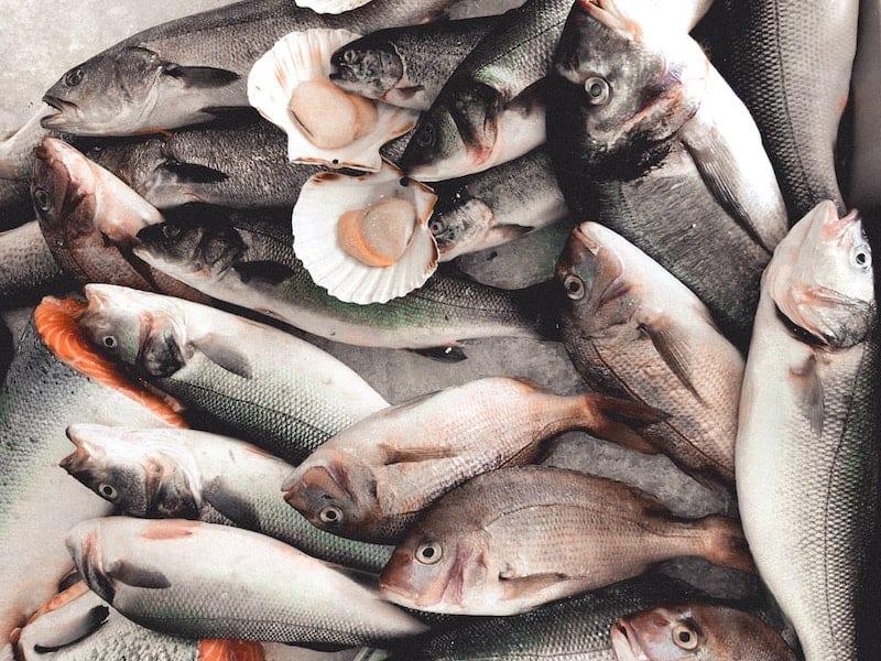 A pile of fish and shellfish